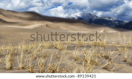 Weeds in Great Sand Dunes of Colorado