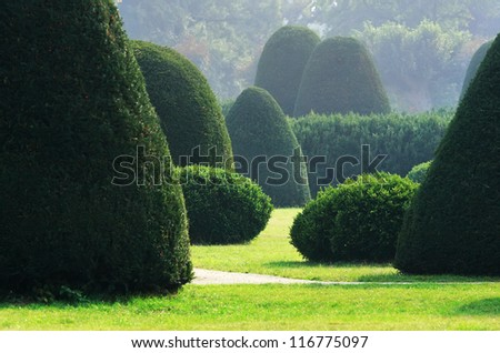 Well-kept bushes and trees in formal english garden