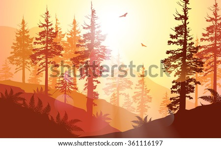 West Coast forest in warm sunlight