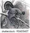 Western Capercaillie - Tetrao urogallus - an illustration by P. Mangelsdorff of the encyclopedia publishers Education, St. Petersburg, Russian Empire, 1896 - stock photo