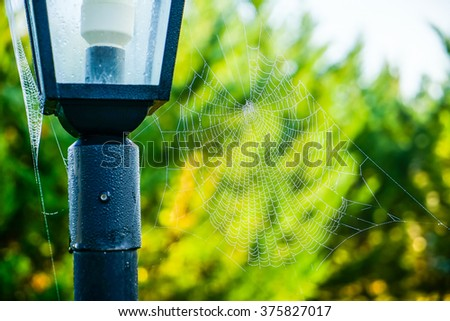 Wet spider web with drops of water on the street lamp