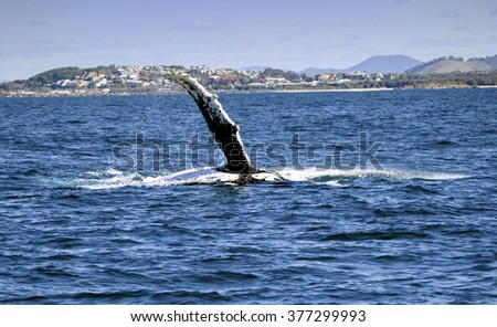 Whale in coffs harbor