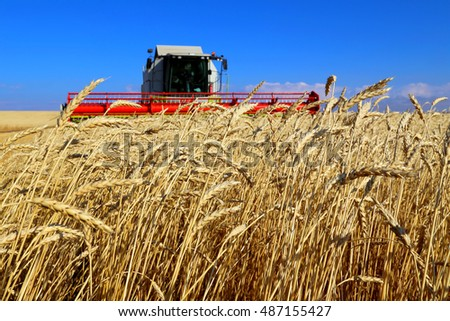 wheat field close up on the background of the harvester
