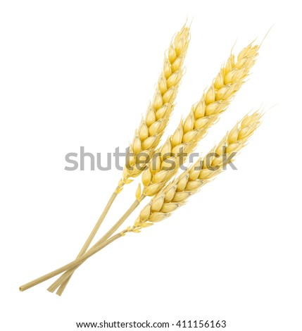 Wheat isolated on white. without shadow