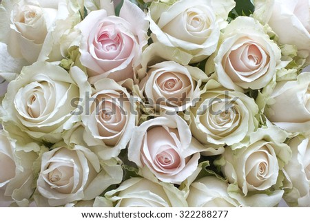 White and pastel vintage roses as a background