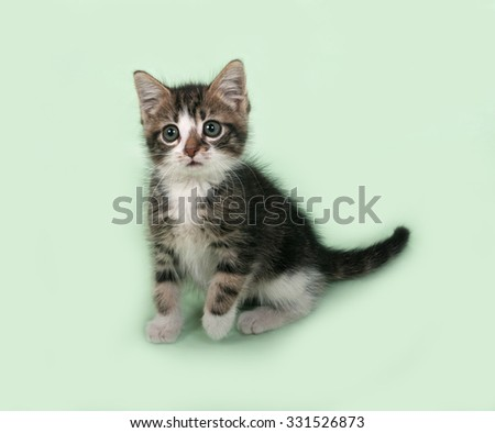 White and striped kitten sitting on green background