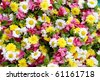 White and yellow flowers for backgrounds - stock photo