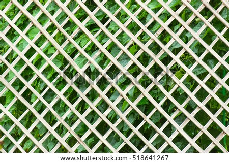 White bamboo stick crossing of net.