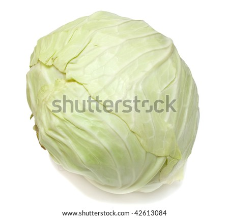 White cabbage on white. Isolated.