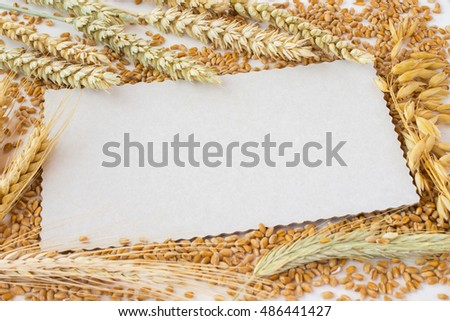 White card on the background of grains. Spikelets of wheat and rye, oats ears. wheat grains