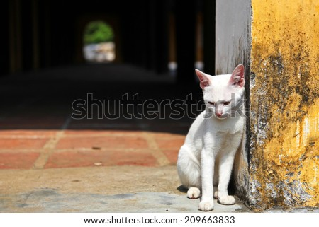 White cat resting outside