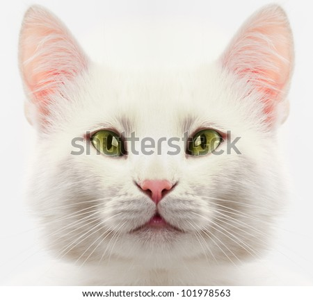 white cat with green eyes close up