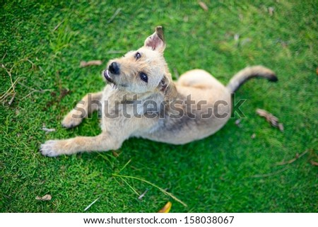 White dog lying on the green grass back ground
