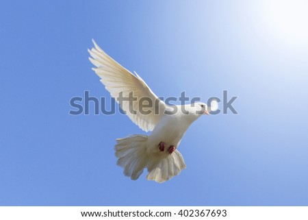 White dove flying on a background of blue sky, a symbol of peace and harmony, bible bird