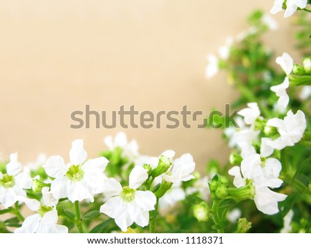 White flowers border with brownish background