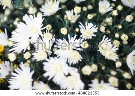 white flowers on blurry background