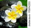 White frangipani on stone close up - stock photo