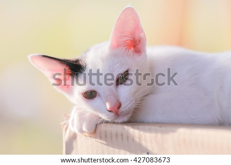 White kitten  sleeping peaceful