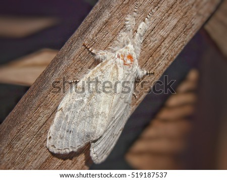 White Moth on a wooden fence.
