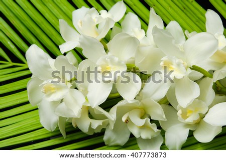 White orchid and palm leaf