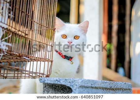 Persian cat in cage