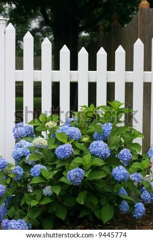 Beautiful Garden Setting Flowers White Picket Stock Photo