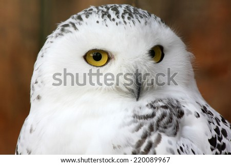 white polar owl sitting on a stick in the zoo