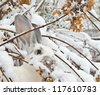 White rabbit looks for food under snow - stock photo