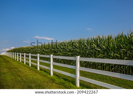 White rail fence leading along cornfield and deep blue sky.