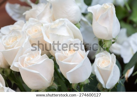 white roses as a floral background