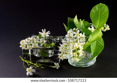 white spring flowers on a black background