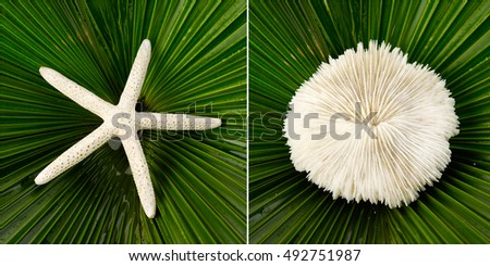 White Starfish and shell with stones on palm