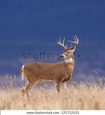essay against deer hunting The over population of the white tailed deer has had a significant impact on the  deer hunting essay  i was resting my head against the.