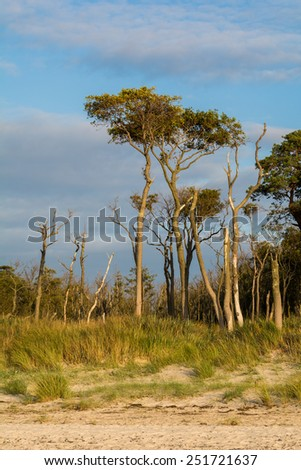 "wild beach ""Weststrand"" at Darss Peninsula in Germany"