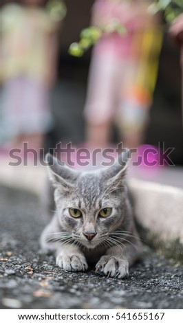 wild cat crunching on road side