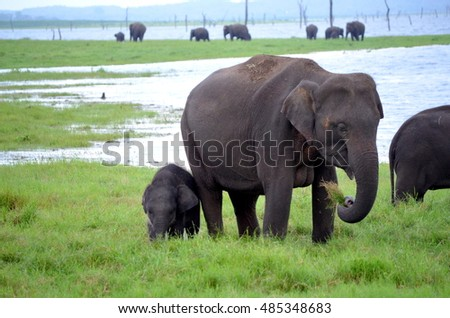 Wild elephants in national park