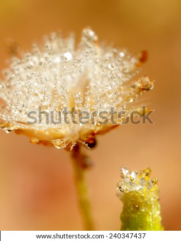Wild flower in the morning dew