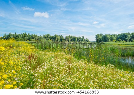 Wild flowers along the shore of a lake