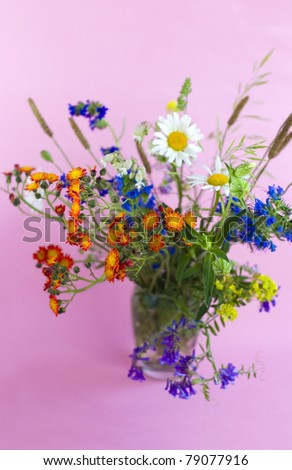 wild flowers on a pink background