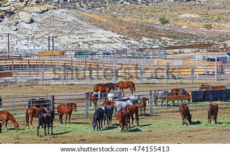 Wild horses in Bureau of Land Management holding pens. Wild horse population is managed by annual roundups and adoption programs.  Horses receive medical inspection and treatment before adoption.