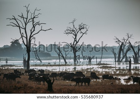 Wild landscape at morning time. Udawalawe National Park in Sri Lanka.