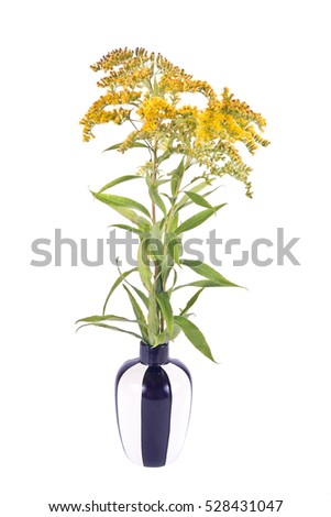 Wild plants Goldenrod on a white background