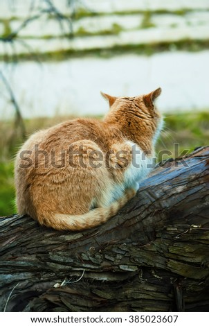 Wild red cat sits on a tree in the forest
