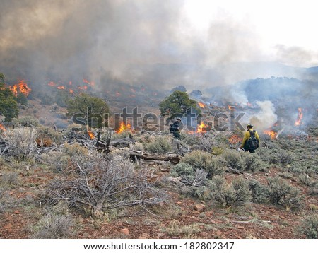 Wildland fire fighters use prescribed fire to manage rangeland vegetation.