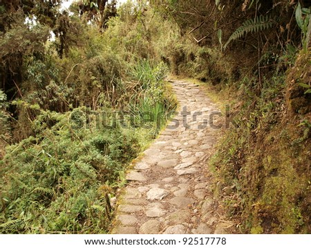 Winding Inca trail in tropical vegetation
