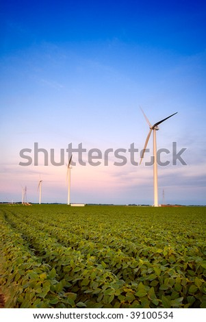 Windmills in soy field