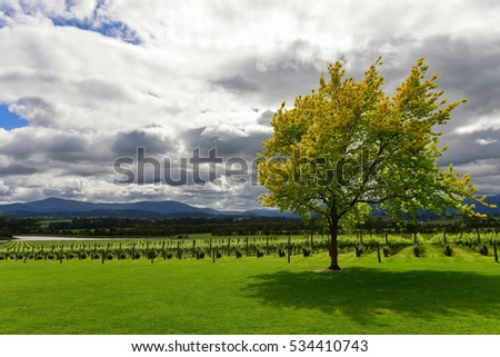 Winery at Yarra Valley in Victoria, Australia