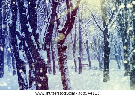 Winter background.Beautiful winter landscape with snow covered trees.