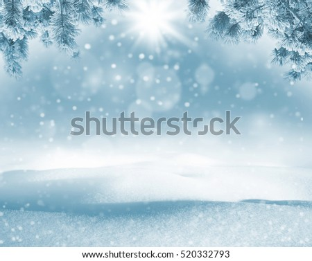 Winter bright background. Christmas landscape with snowdrifts and pine branches in the frost
