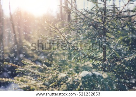 Winter fir tree, vintage style